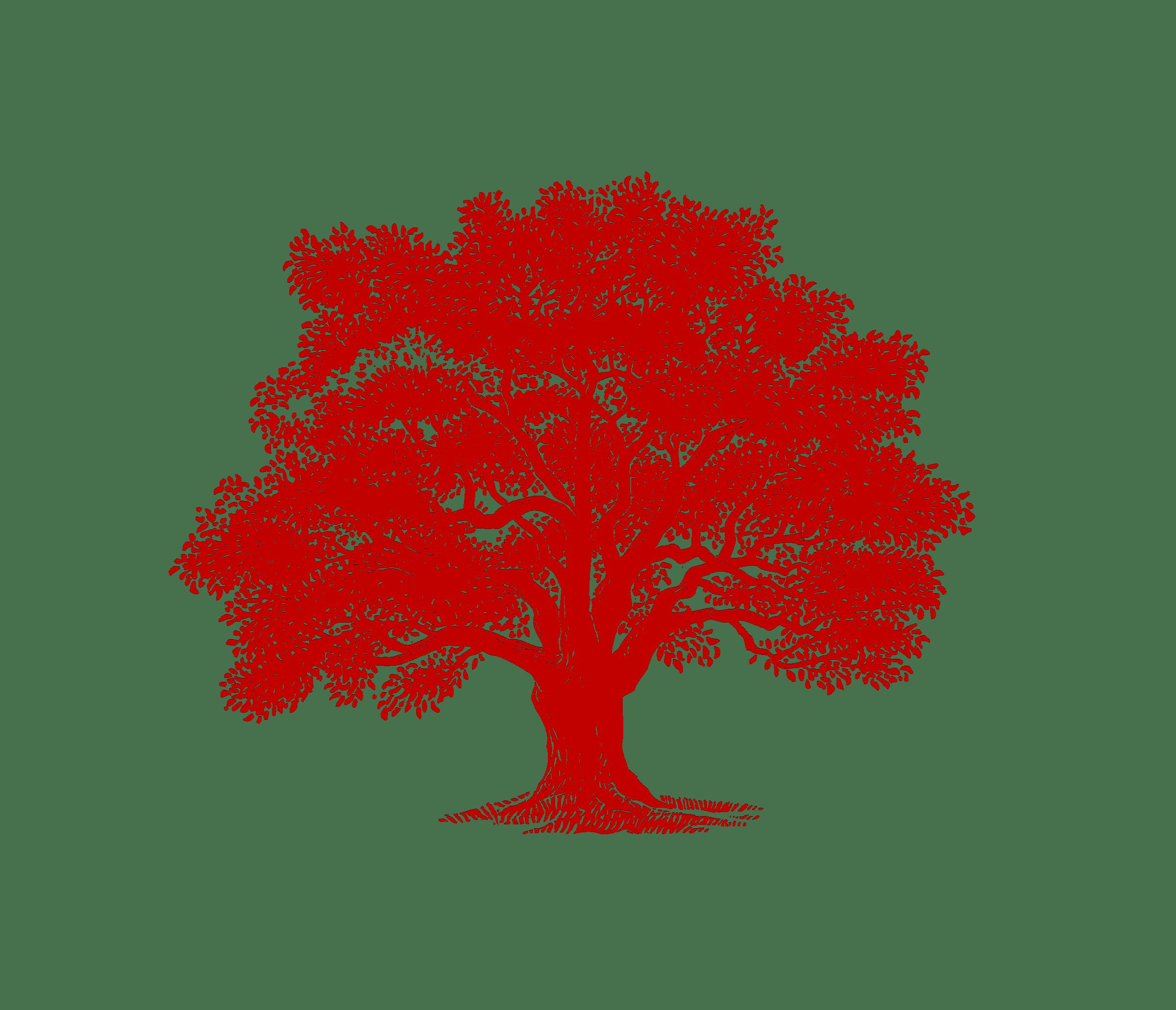 Download Beckmen Vineyards Tree